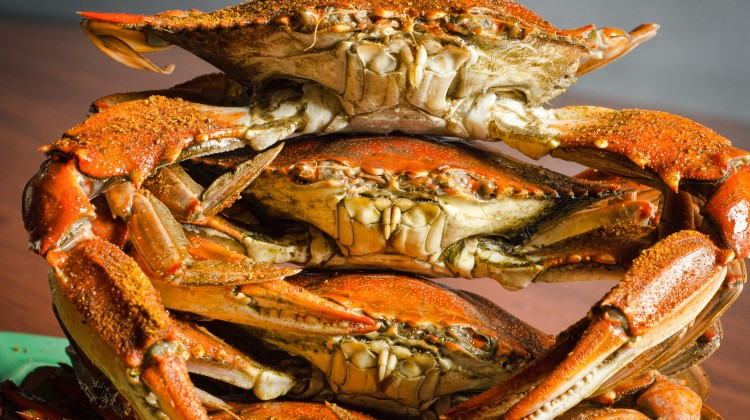 Nobody Else Stacks Up crabs